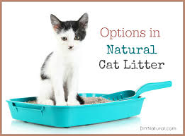 natural cat litter choices use what works best for your pet