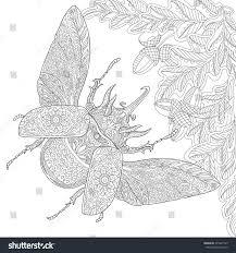 zentangle stylized cartoon rhinoceros beetle oak stock vector