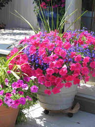 Plant Combination Ideas For Container Gardens Fall Container Gardening Flowers Container Gardening Flowers