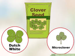 how to grow a clover lawn 14 steps with pictures wikihow