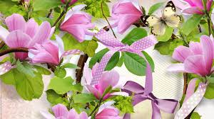 magnolia tag wallpapers page 2 biala flowers white flower