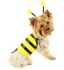 Small Dog Halloween Costumes Ideas 26 Dog Costumes Images Puppy Costume Animals