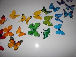 3d butterflies the rainbow multi coloured collection butterfly
