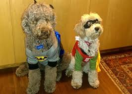 Halloween Costumes Batman Robin Pets Wearing Halloween Costumes Send Photos Mainetoday