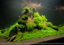 Best Substrate For Aquascaping An Article On Red Aquatic Plants The Green Machine