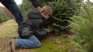 christmas season starts for dowagiac tree farm wsbt
