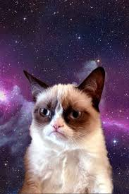 cat universe wallpaper he hates every thing in the universe grumpy cat pinterest