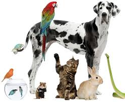 Pet What Pet Would You Like Playbuzz