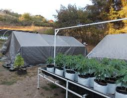 Light Cycle For Weed What Times Should You Pull Tarp For A Light Dep 3 Methods The