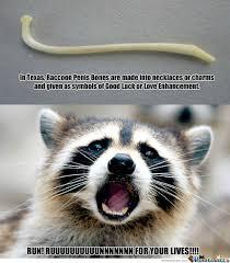 Evil Raccoon Meme - raccoon meme cliparts suggest cliparts vectors