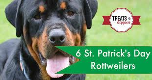 st patrick u0027s day rottweilers treats happen