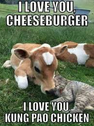 Animal Meme - 24 funny animal memes and pictures of the day cute daily lol pics
