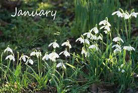 Flower Of The Month Sophieco Wild January Flower Of The Month