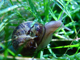 how to rid your garden of slugs and snails dengarden