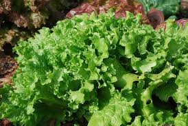 Florida Vegetable Gardening Guide by Gardening Time To Get Your Veggies In The Ground Jacksonville