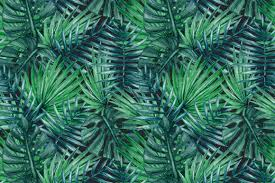 10 lush palm tree leaves patterns psdblast