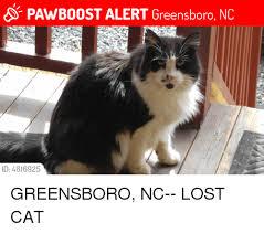 Lost Cat Meme - pawboost alert greensboro nc id 4816925 greensboro nc lost cat