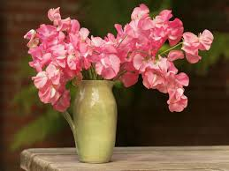 Sweet Pea Images Flower - is there anything sweeter than sweet peas thank you j garden