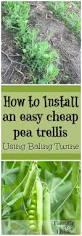 25 best ideas about cheap trellis on pinterest pvc pipe
