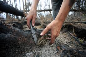 Morel Mushroom Map You Can Make 960 A Day Picking Post Wildfire Mushrooms