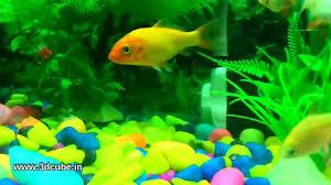 Home Aquarium by Home Aquarium Fish Tank Video Youtube