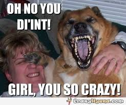 Funny Dog Face Meme - funny dog face photo