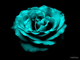 turquoise roses refreshed turquoise by jrabbittigs redbubble