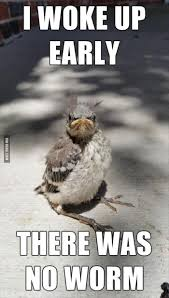 Goodmorning Meme - top 30 funny good morning quotes morning word fashion ki batain