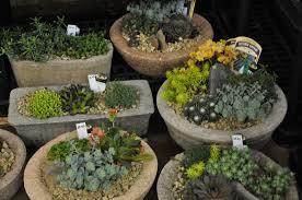 cracked pot gardener reasons to go to the bloom n u0027 garden show