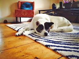Hardwood Floor Rug Important Tips Before Placing Rugs On Hardwood Floors The Log