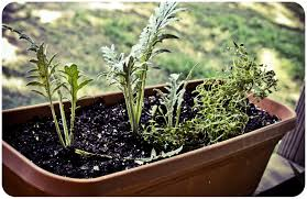 Window Box For Herbs Plants Hbdocumentary