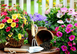 freshen up your flower garden with these expert recommendations