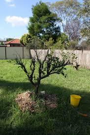 chookie u0027s back yard requiem for a garden