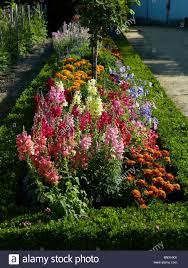download flowers for garden borders solidaria garden