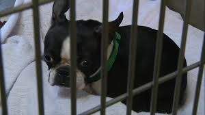 Table Mountain Animal Shelter by Animal Rescue Abc7news Com
