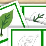 montessori tree printable free montessori printable parts of a tree trillium montessori