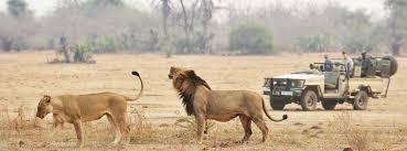 safari zambia safari botswana safari luxury safaris in africa