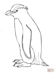 penguins coloring pages glum me
