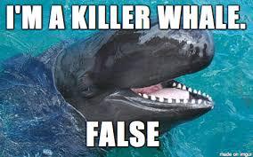 Whale Meme - false killer whale meme on imgur