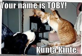 Kunta Kinte Meme - your name is toby kunta kinte cheezburger funny memes funny