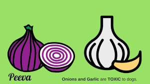 are onions for dogs food that is not safe for your to consume