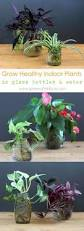 Our Favorite Plants How To by How To Easily Root Plants In Water With Cuttings Propagation