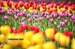 ญี่ปุ่น : Huis Ten Bosch part2 ดงดอกไม้ แห่งแดนอาทิตย์อุทัย by o-re-o