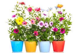 imagenes de jardines pequeños con flores ideas para decorar jardines pequeños vix