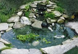 Decorative Pond Chemical Free Pond Maintenance Products Algae Removal