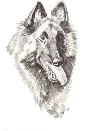 belgian sheepdog uk cultlea co uk