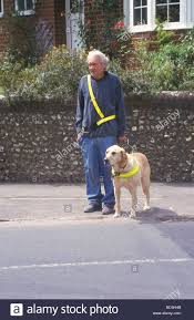 Blind Dog And His Guide Dog Blind Man Standing By The Side Of The Road With His Guide Dog