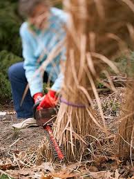 keeping ornamental grasses happy early grasses and winter
