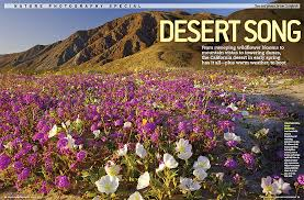 anza borrego wildflowers anza borrego desert state park photos prints cornforth images