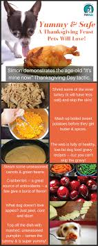 how to make a safe thanksgiving feast for your pets pethub